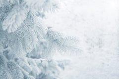 Winterhintergrund - weißer eisiger Tannenzweig Stockfotografie
