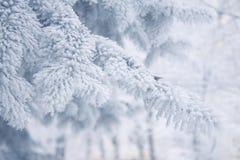 Winterhintergrund - weißer eisiger Tannenzweig Stockfotos