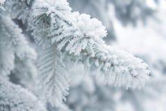 Winterhintergrund - weißer eisiger Tannenzweig Stockbilder