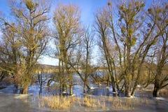 Winterhochwasser bei der Oder im Februar Lizenzfreies Stockfoto
