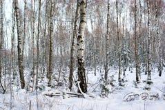 Winterholz lizenzfreies stockfoto