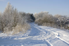 Winterholz lizenzfreie stockfotos