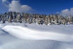 Winterholz Stockfoto
