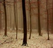 Winterholz Stockfotos