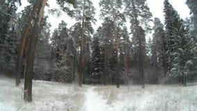 Winterholz stock video footage