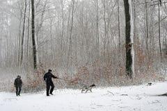 Winterhund stockfotos