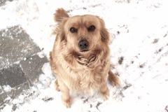 Winterhund Stockfoto