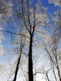 Winterimpressions photographie stock libre de droits