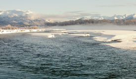 Wintering Chilkat River Royalty Free Stock Images