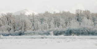 Wintering Chilkat Valley Stock Photo