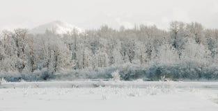 Wintering Chilkat Valley Stock Photo