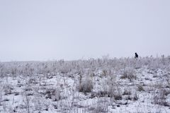 Wintering.Minimalism. Monochrome gray sky. Shepherd with a flock. Nomadic household Kazakhstan. royalty free stock photos