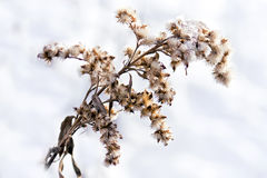 Wintering of seed Royalty Free Stock Photography