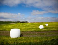Blue skies and bales of hay. Winterized bales of hay lay on a combined field of green set amongst a blue sky Royalty Free Stock Photography