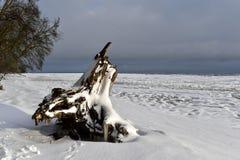 Winterküstenlandschaft mit enormem totem Baumstumpf auf Strand Stockfotografie