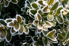Winterkasten Stockfotografie
