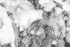 Winterkiefer mit funkelndem Hintergrund des Schnees Stockbild