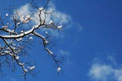 Winterkristallhimmel Stockfoto