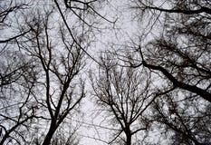 Winterkrone von Bäumen in der Schwarzweiss-Farbe lizenzfreie stockfotografie