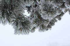 Winterkuß Stockfotos