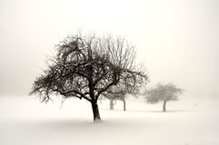 Winterland Royalty Free Stock Images