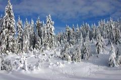 winterland Arkivfoton