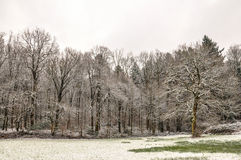 Winterland. First signs of winter in freiburg Stock Photos