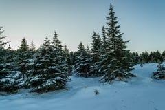 Winterland Island stockfoto