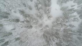Winterland, mosca sobre árbol de abeto en la nevada Frío, carpatian almacen de video
