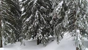 Winterland, mosca sobre árbol de abeto en la nevada Frío, carpatian metrajes