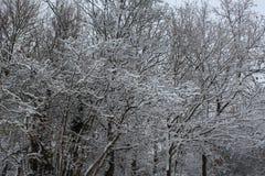 Winterlandbos royalty-vrije stock foto