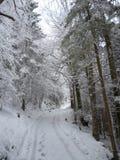 Winterlandscape in Beieren in Duitsland royalty-vrije stock afbeeldingen