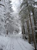Winterlandscape i bavaria i Tyskland royaltyfria bilder
