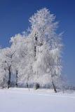 Winterlandschaft lizenzfreies stockbild