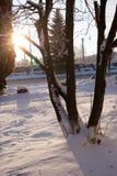 Winterlandschaft - ausgebreiteter Baum des Waldes im Sonnenuntergang beleuchten Szene - Märchenland im kühlen Wetter in schneebed Stockfotografie