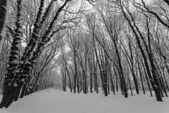 Winterlandschaft, Bäume bedeckt im Schnee stockbild