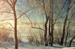 Winterlandschaft - bereifte Bäume nahe dem Winterfluß bei dem Sonnenaufgang Stockfotografie