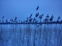 Winterlandschaft - blaue Stunde Lizenzfreie Stockfotos