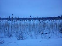 Winterlandschaft - blaue Stunde Lizenzfreie Stockfotografie