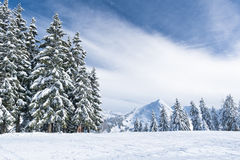 Winterlandschaft in den Bergen mit Schnee und Schnee bedeckte Bäume Lizenzfreie Stockfotos
