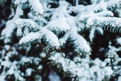 Winterlandschaft in den schneebedeckten Waldkiefernniederlassungen umfasst mit Schnee im kalten Winterwetter Lizenzfreie Stockfotografie