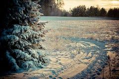 Winterlandschaft an der Dämmerung lizenzfreie stockfotos