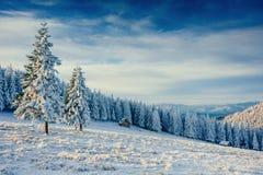 Winterlandschaft der schneebedeckten Bäume Lizenzfreie Stockfotos