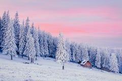 Winterlandschaft der schneebedeckten Bäume Lizenzfreies Stockbild