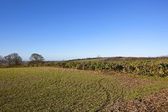 Winterlandschaft der Yorkshire-Wolds mit Spielabdeckungsanlagen Stockbild