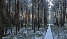 Winterlandschaft des frühen Morgens Stockbild