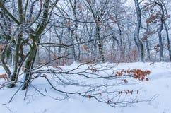 Winterlandschaft des frischen Schnees im Wald lizenzfreie stockfotos