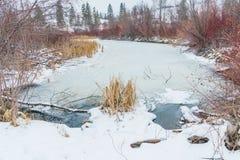 Winterlandschaft des gefrorenen Sumpfes mit Schilfen und Weiden lizenzfreies stockfoto