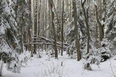 Winterlandschaft des hauptsächlich Laubwaldes im Sonnenunterganglicht Stockfotos