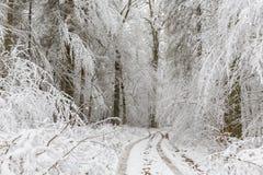 Winterlandschaft des Naturwalds mit Eichen Stockfotografie